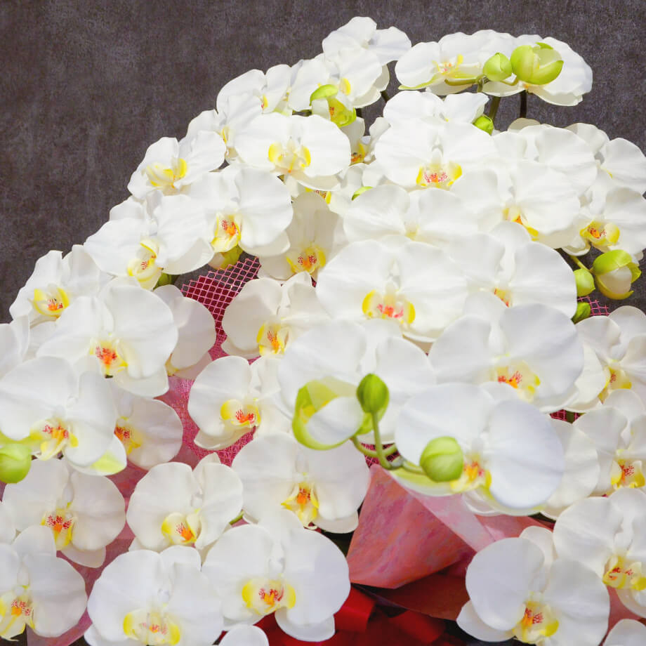 Flower Image 01